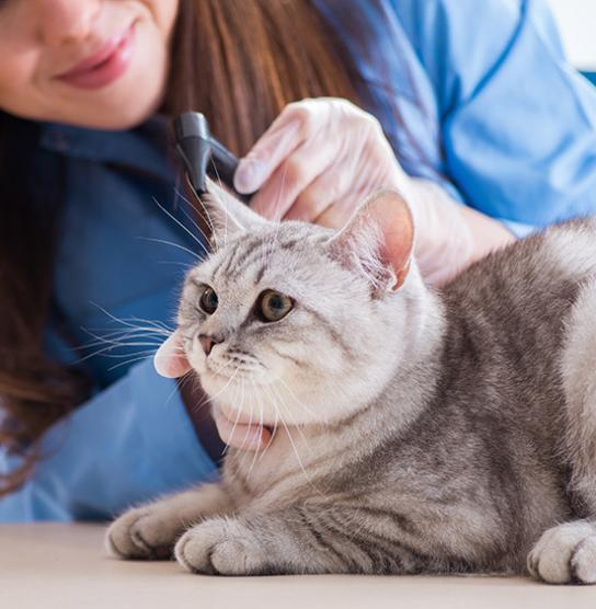 Chat chez le vétérinaire