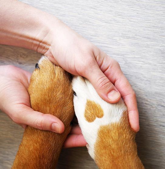 Protection chien avec assurance pour animaux